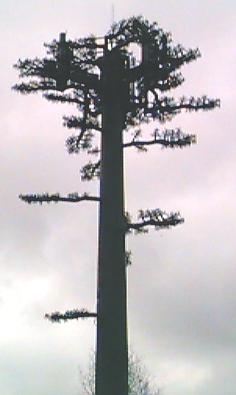 121-tree1