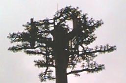 121-tree2